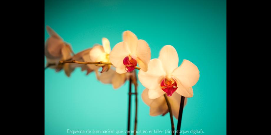 Taller de iluminación ejemplo 07 curso fotografía Aroma de la Luz